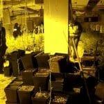 Zaplenjeno 2 tone marihuane, među uhapšenima i Srbi